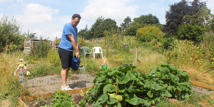 Watering allotment Jame Harrison.jpg